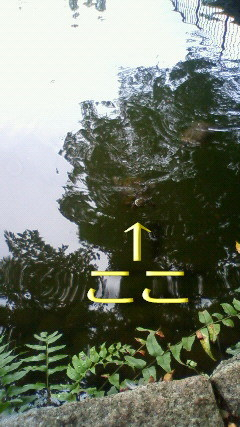 NEC_0282-2.jpg